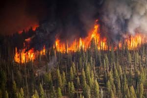 Płoną lasy. Aż 100 pożarów w jeden dzień