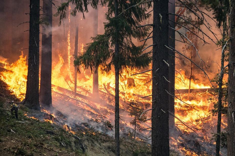 Trudna sytuacja w Polsce. Zagrożenie pożarowe niemal w całym kraju