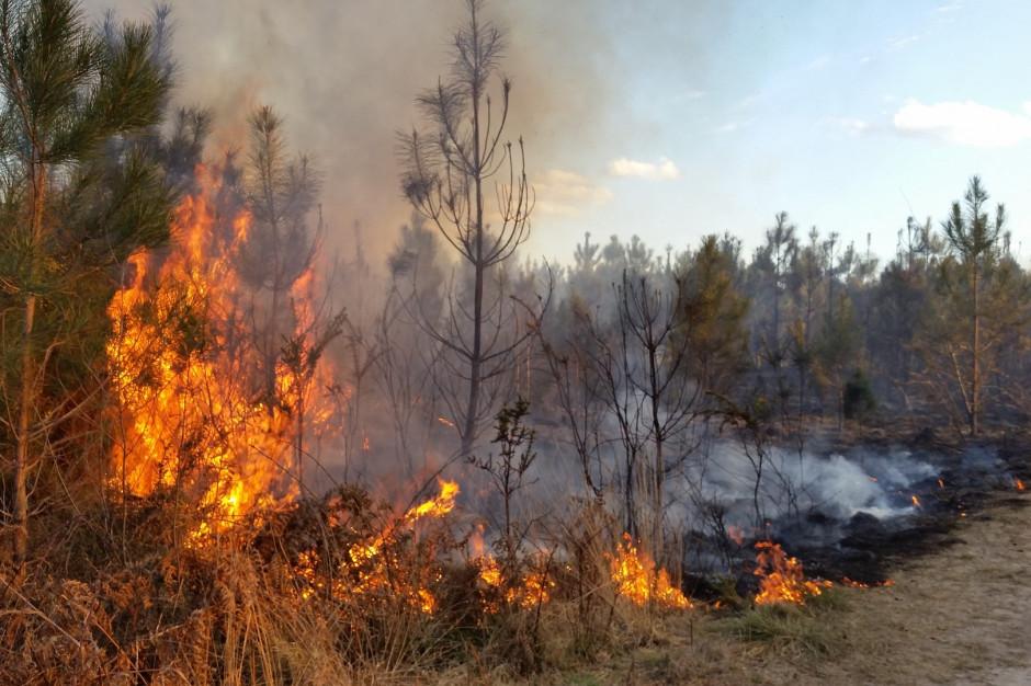 Utonięcia, pożary i wypadki. Tragiczny bilans weekendu