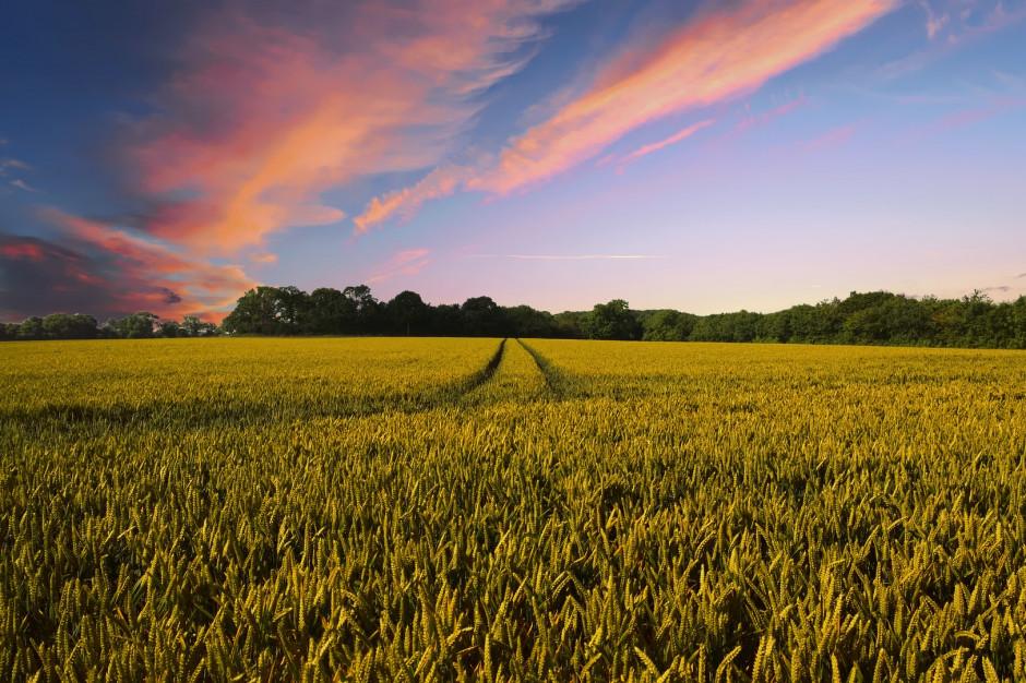 Rząd przyjmie strategię na rzecz zrównoważonego rozwoju wsi
