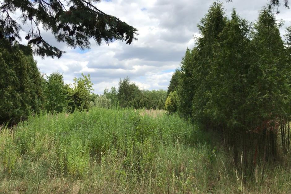Poznań: zamiast pola golfowego na działce wyrośnie las