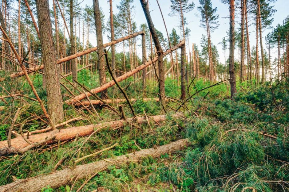 MSWiA opublikowało projekt noweli dotyczącej tzw. zasiłków klęskowych. Będą kary dla włodarzy