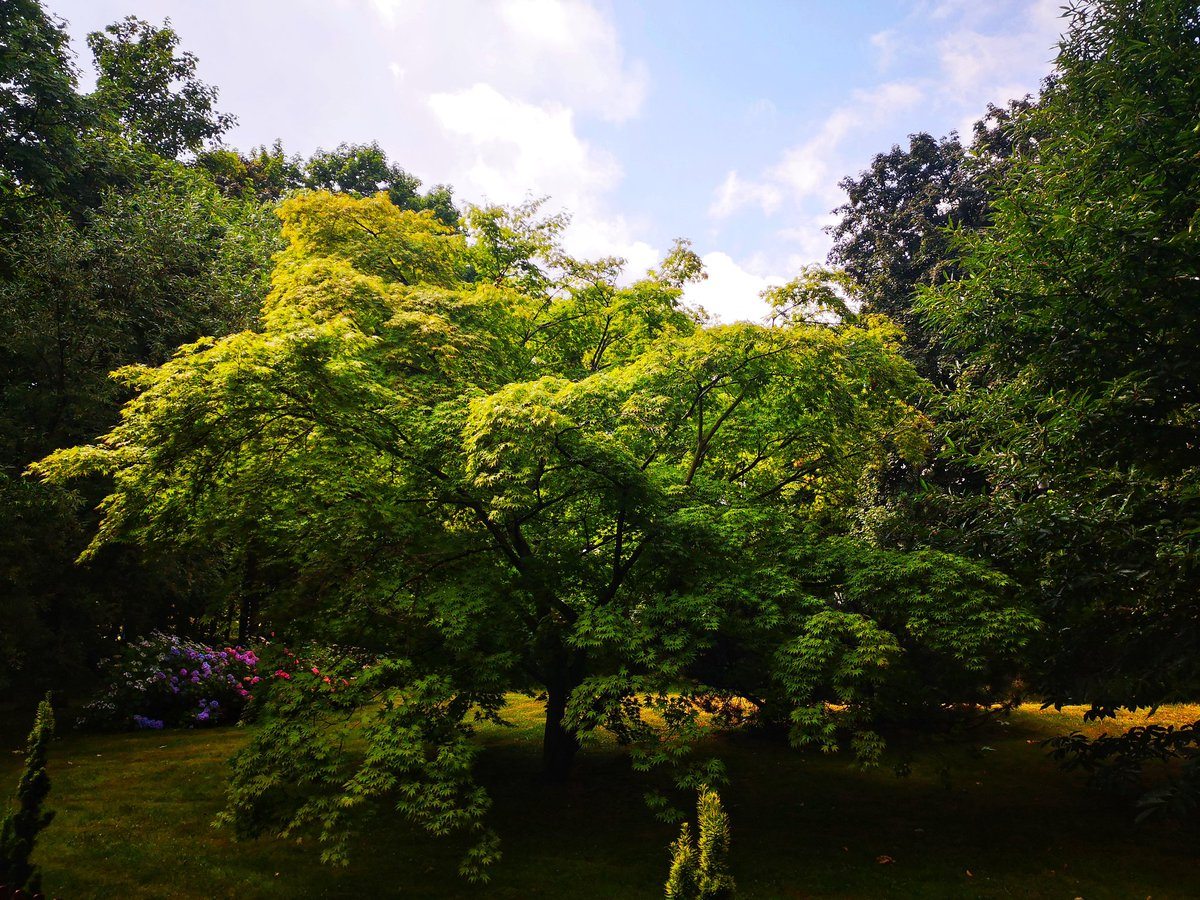 Park zajmuje około 600 hektarów (fot. Twitter/Park Śląski)