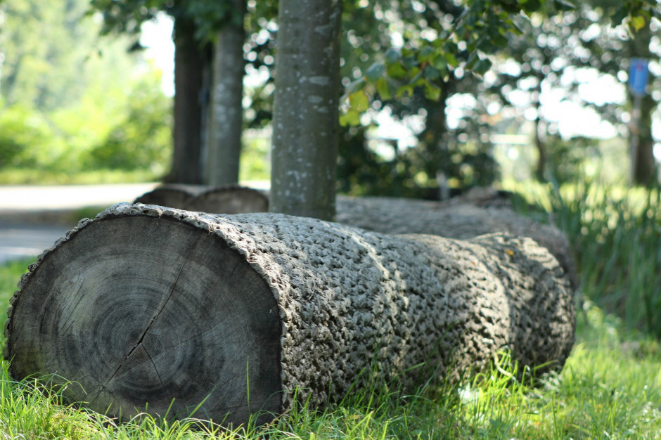 W Olsztynie rozpoczyna się wycinka drzew pod budowę linii tramwajowej