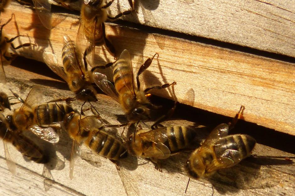 Po wytruciu pszczół ludzie chcą pomóc w odbudowie pasieki