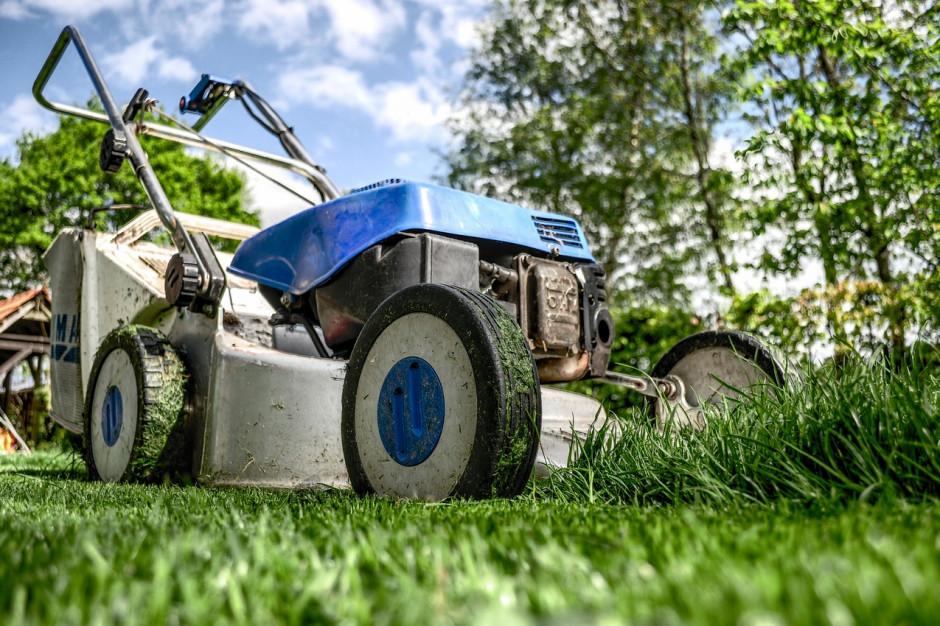 W Łodzi wprowadzono standardy utrzymania trawników na terenach miejskich