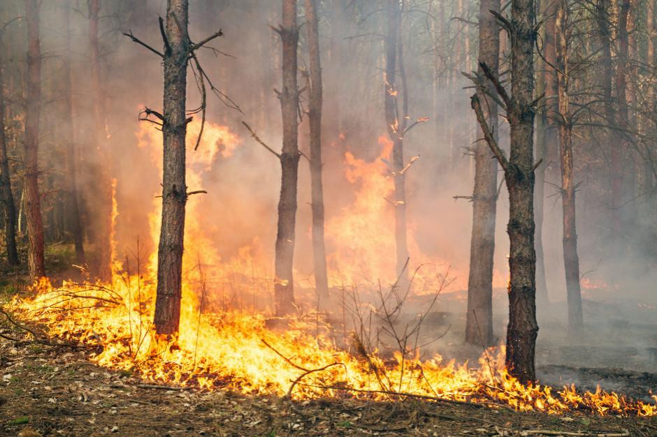 Zagrożenie pożarowe w dolnośląskich lasach
