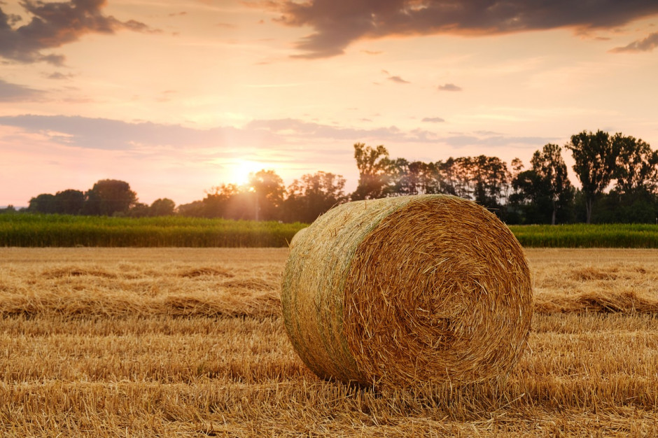 Związek Gmin Wiejskich RP apeluje o weryfikację gmin objętych suszą