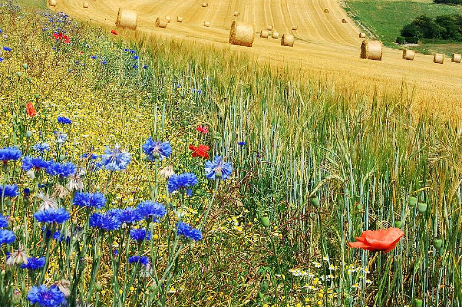 Opolskie: 16 mln zł na projekty związane z ochroną bioróżnorodności