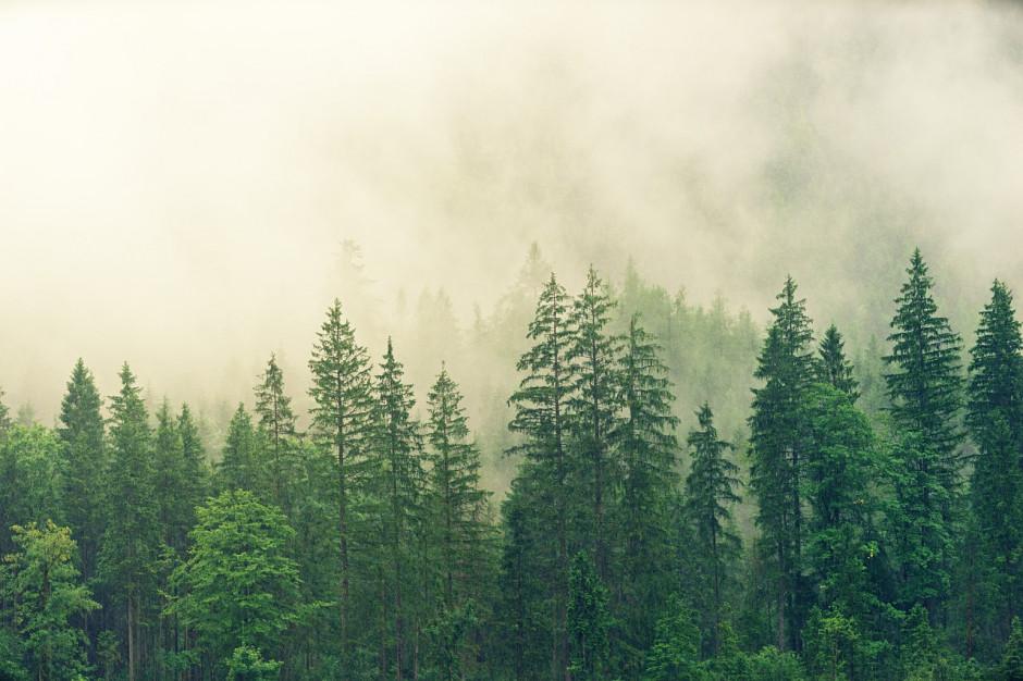 GOPR: w Beskidach poranki są rześkie; dobre warunki na szlakach
