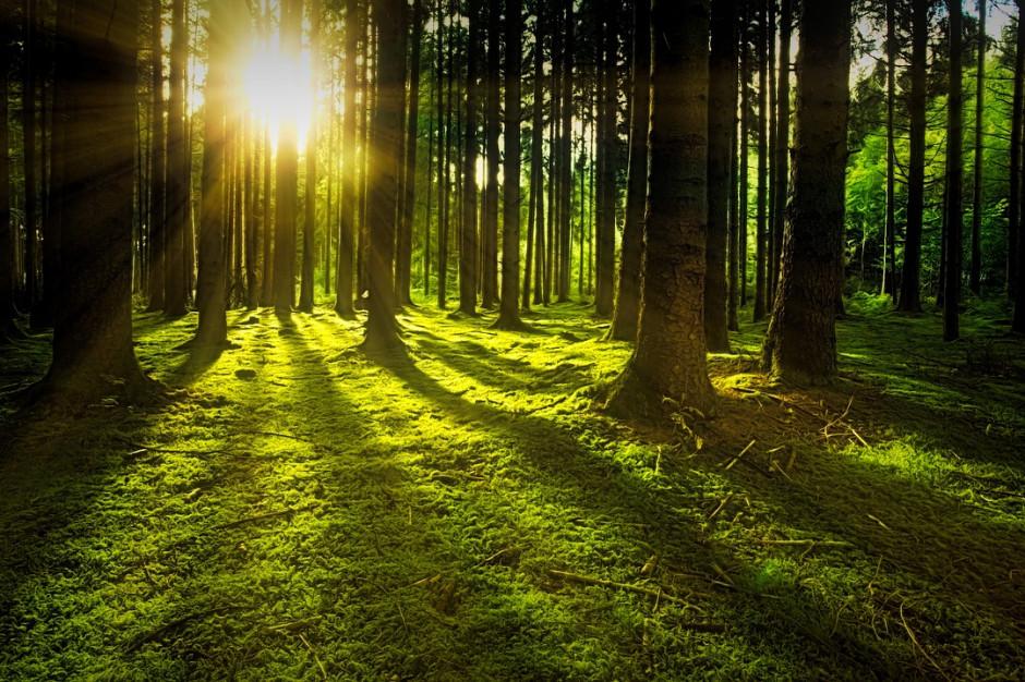 Opolskie: 16 mln złotych na ochronę bioróżnorodności
