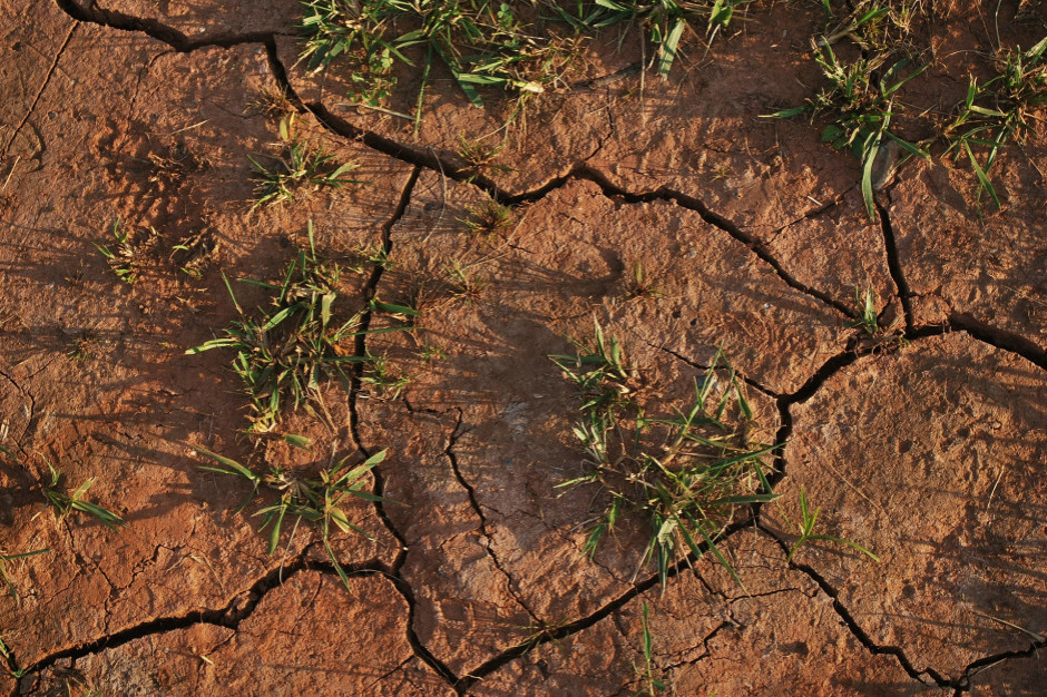 Kujawsko-pomorskie: susza w 137 gminach, powołano 108 komisji szacujących straty