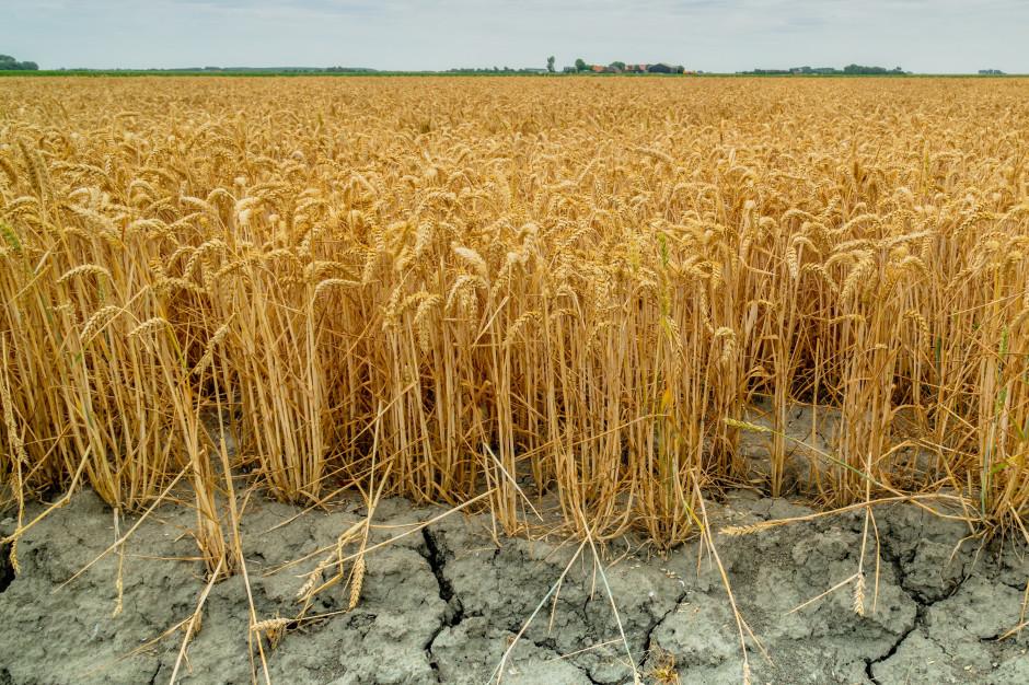 Straty spowodowane suszą: ponad 1 mld 87 mln zł