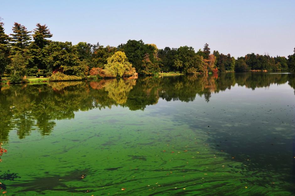 Z powodu sinic zamknięte kąpielisko w Trzebieży