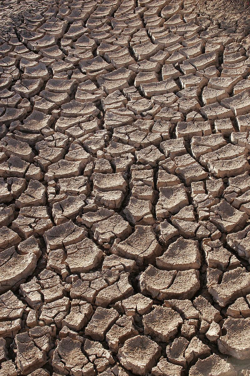 Susza to potężny problem dla wielu krajów (fot. wikipedia.org/Tomas Castelazo/CC BY 3.0)