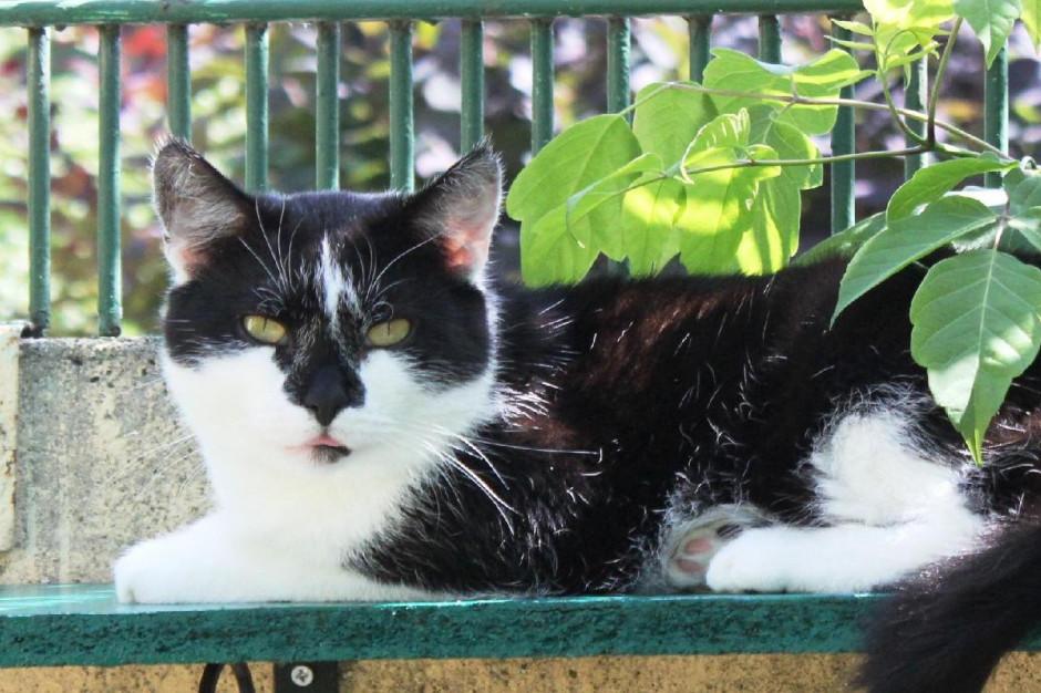 W Poznaniu można bezpłatnie zaczipować kota