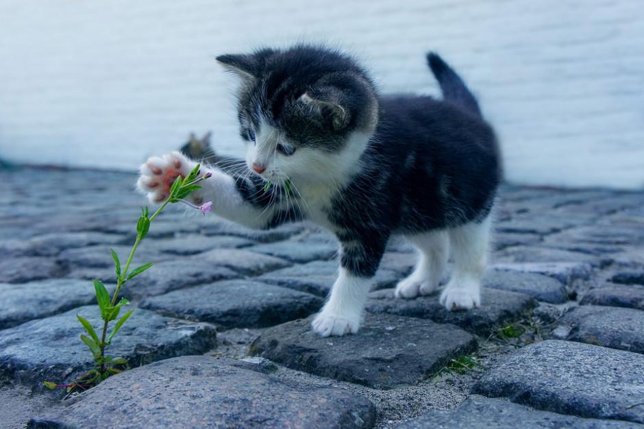 Kraków policzył wolno żyjące koty