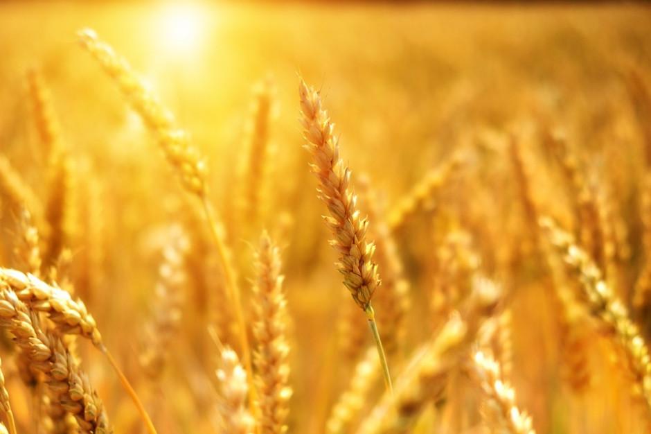 W Pomorskiem powołano komisje ds. szacowania strat w rolnictwie