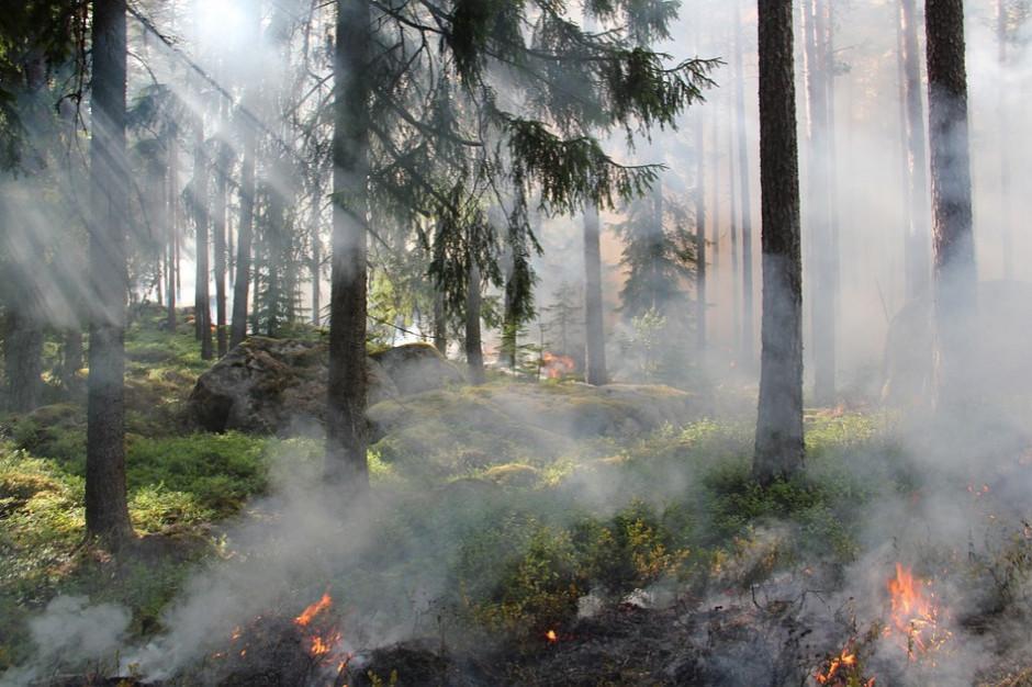 Strażacy gaszą pożary w lasach niedaleko Gorzowa