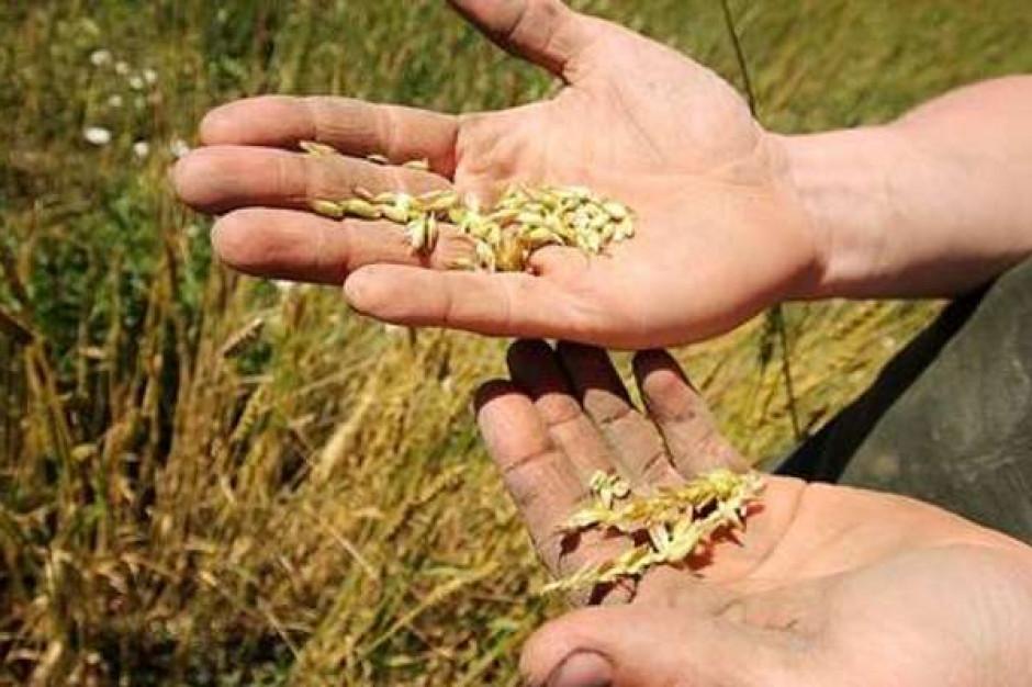 Warmińsko-mazurskie: blisko 30 tys. hektarów upraw dotkniętych suszą