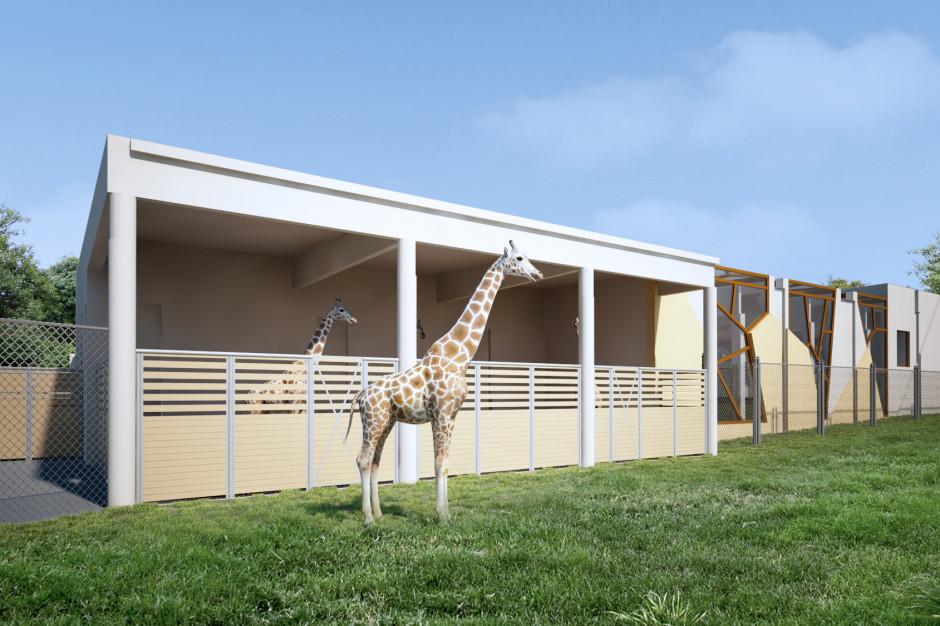 W poznańskim zoo powstanie nowy wybieg dla żyraf i nosorożców