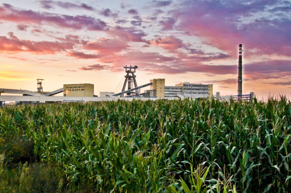 Łęczna: Gmina, fundacja i spółka węglowa z inicjatywą dla krajobrazu