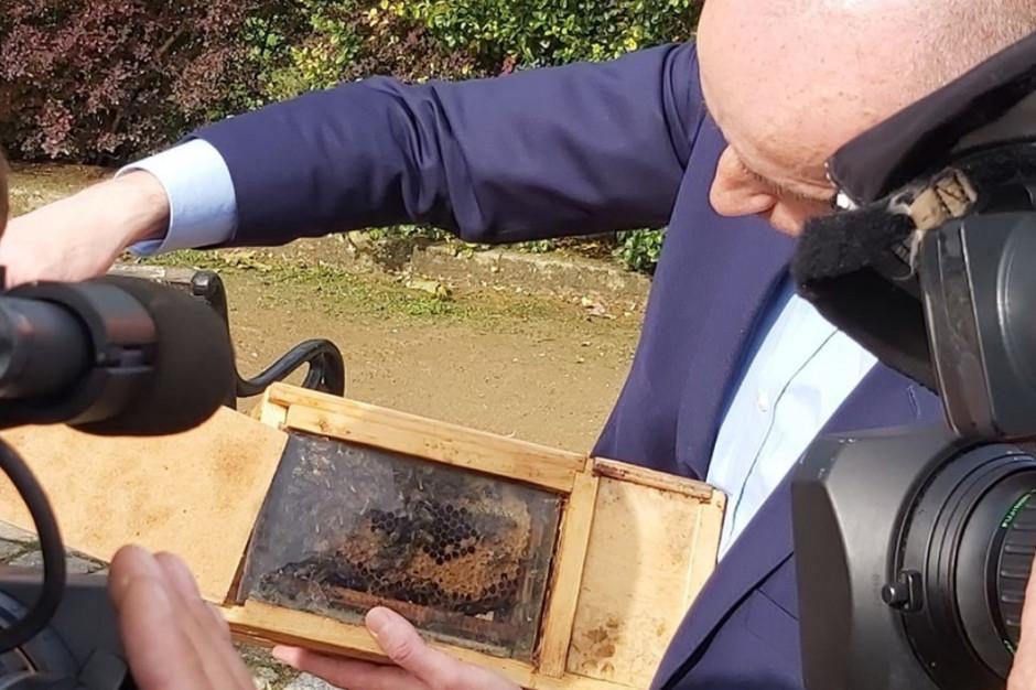 """""""Mucha chroni owady"""" - propozycja szczecińskiego kandydata PiS"""