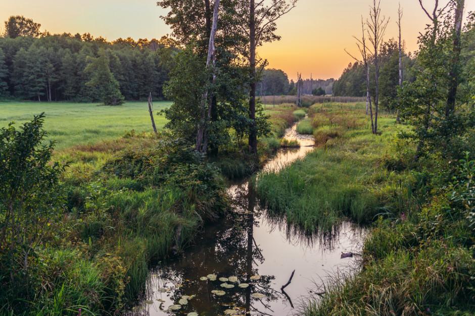 Wykryto środek owadobójczy w rzece. Władze Hrubieszowa informują prokuraturę