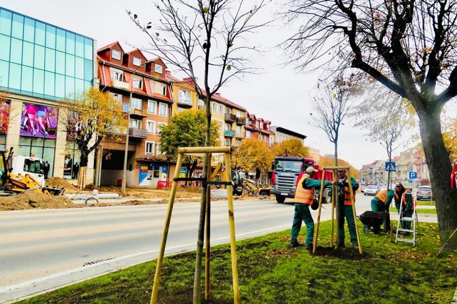 Ełk: posadzą 300 drzew w wieku 10 - 15 lat