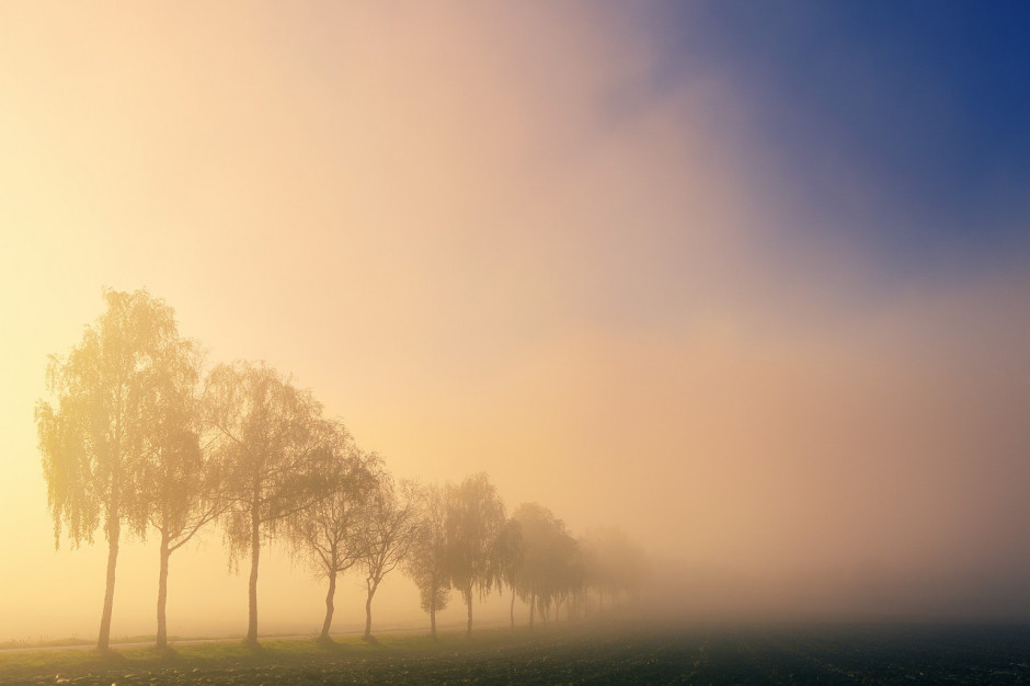 Kolejny dzień z dużym ryzykiem gęstej mgły. IMGW ostrzega trzy województwa