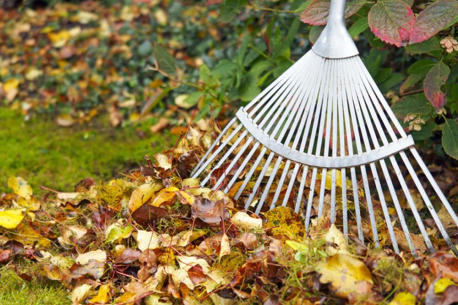 Koniec z grabieniem liści. Miasto chroni jeże
