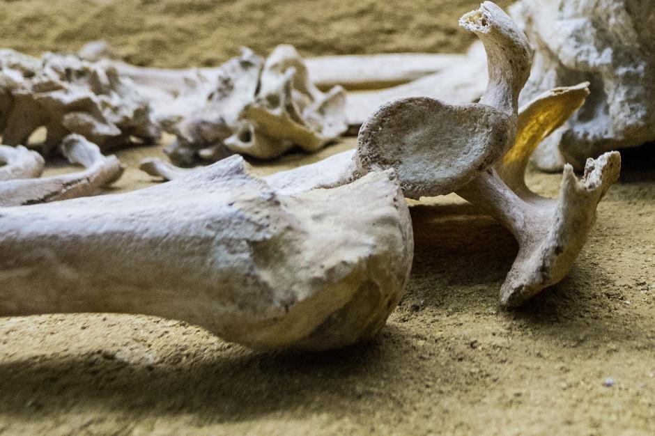 Gdańsk: Na Westerplatte odkryto ludzkie szczątki