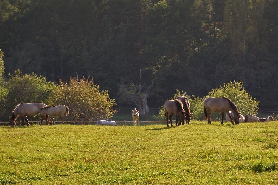 W Parku Krajobrazowym Dolina Baryczy powstała ścieżka przyrodnicza