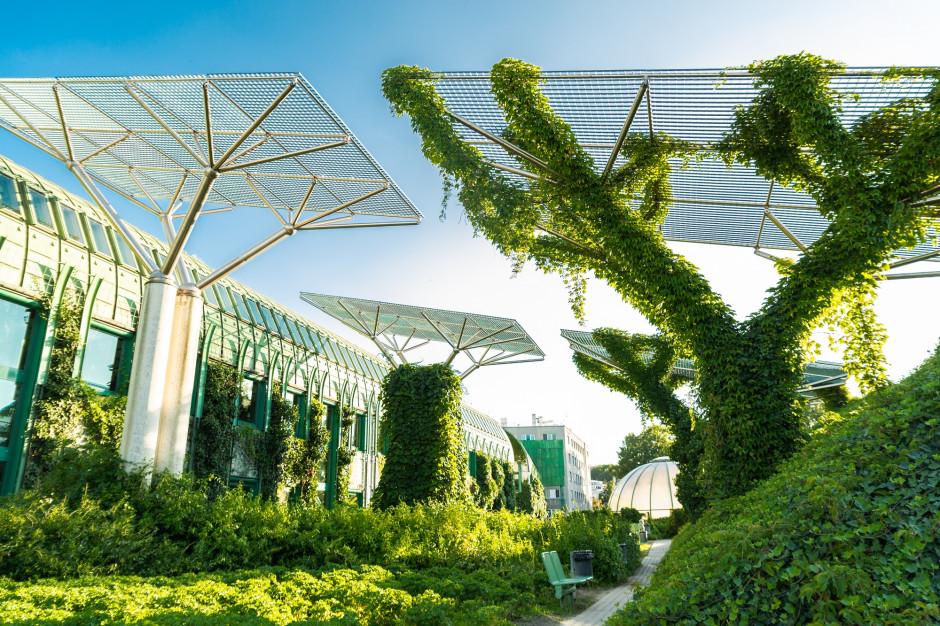 Dachy, kieszonkowe parki, rozrzedzanie ulic. Miasta szykują się na zmiany klimatu