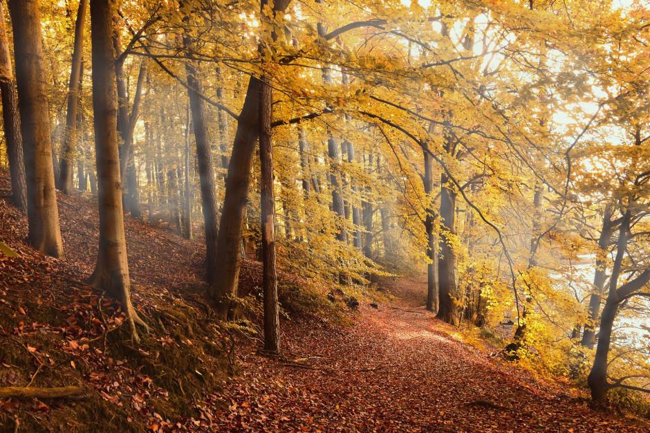 Milion hektarów lasów w Polsce zagrożonych