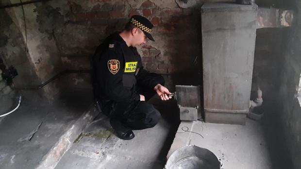 Strażnik pobierający próbkę popiołu z przydomowego kotła cieplnego(fot. Straż Miejska w Gdańsku)