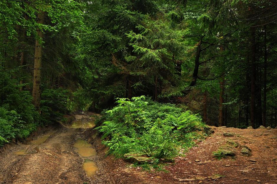 Poprawiły się warunki na szlakach turystycznych w Beskidach