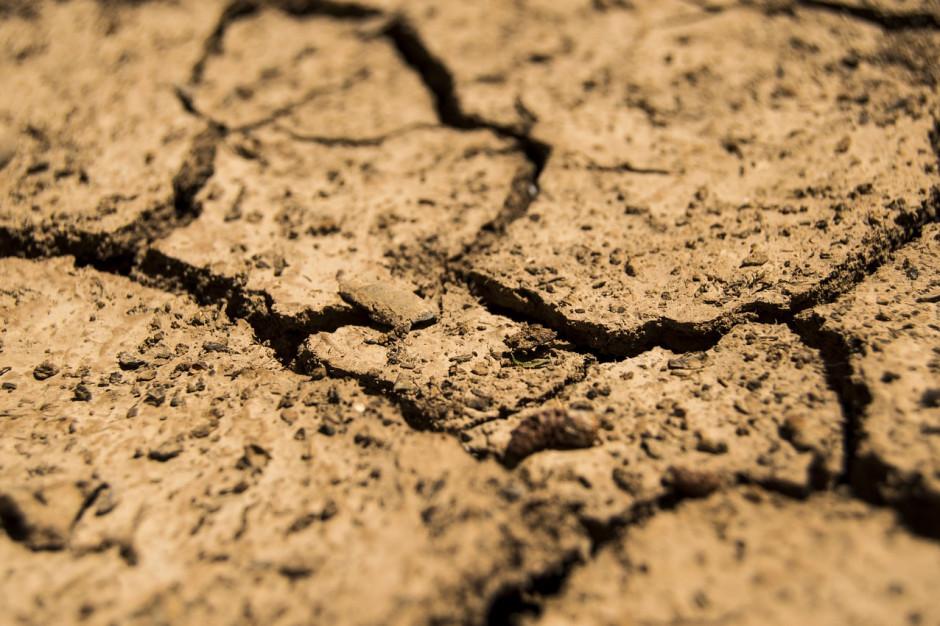 Piątek ostatnim dniem na składanie wniosków o pomoc suszową