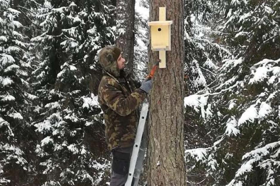 Podkarpaccy leśnicy wieszają i konserwują budki dla ptaków