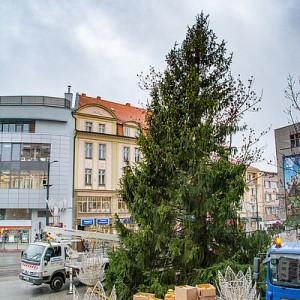 Przyjechała z Nadleśnictwa Kudypy.  Olsztyńska  choinka ustawiona przed ratuszem przywdziała już świąteczne szaty, a 6 grudnia (piątek) rozbłysła światełkami. Na drzewku zawisło ok. 300 bombek oraz leadowe oświetlenie. (fot. UMO)