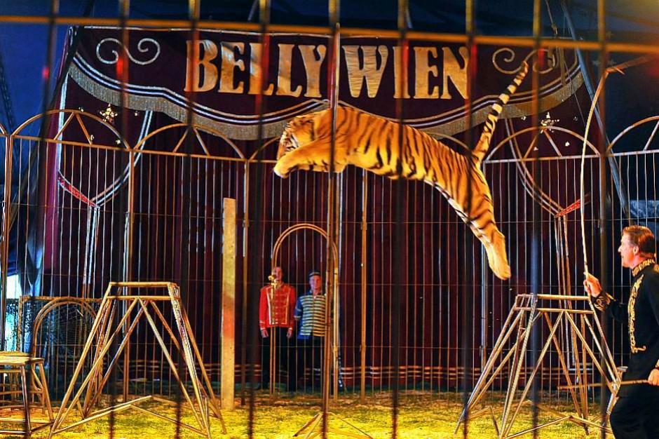W tej kadencji Sejmu możliwy zakaz występów zwierząt w cyrkach