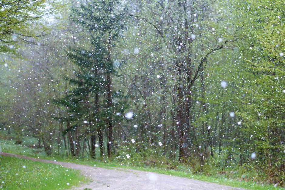 IMGW ostrzega przed silnym wiatrem i marznącym deszczem