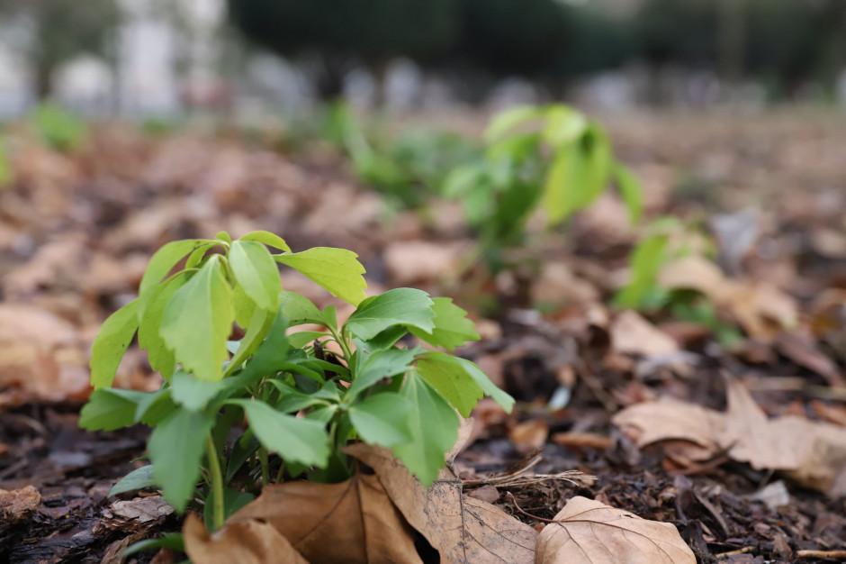 Gorzów Wielkopolski: Rewitalizacja w parku Wiosny Ludów zakończona