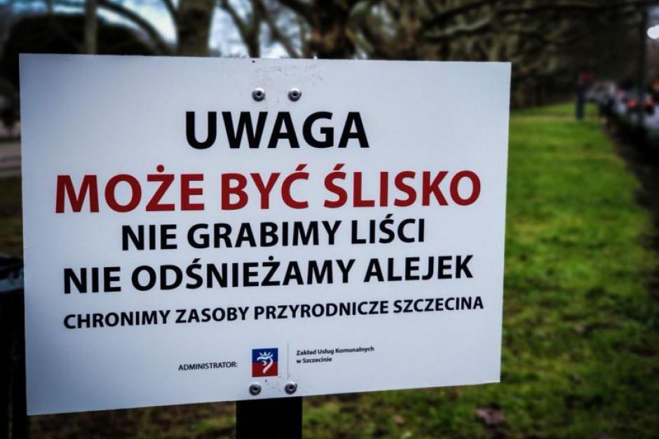 Szczecin zaprzestaje grabienia liści i odśnieżania alejek. Chodzi o ochronę przyrody
