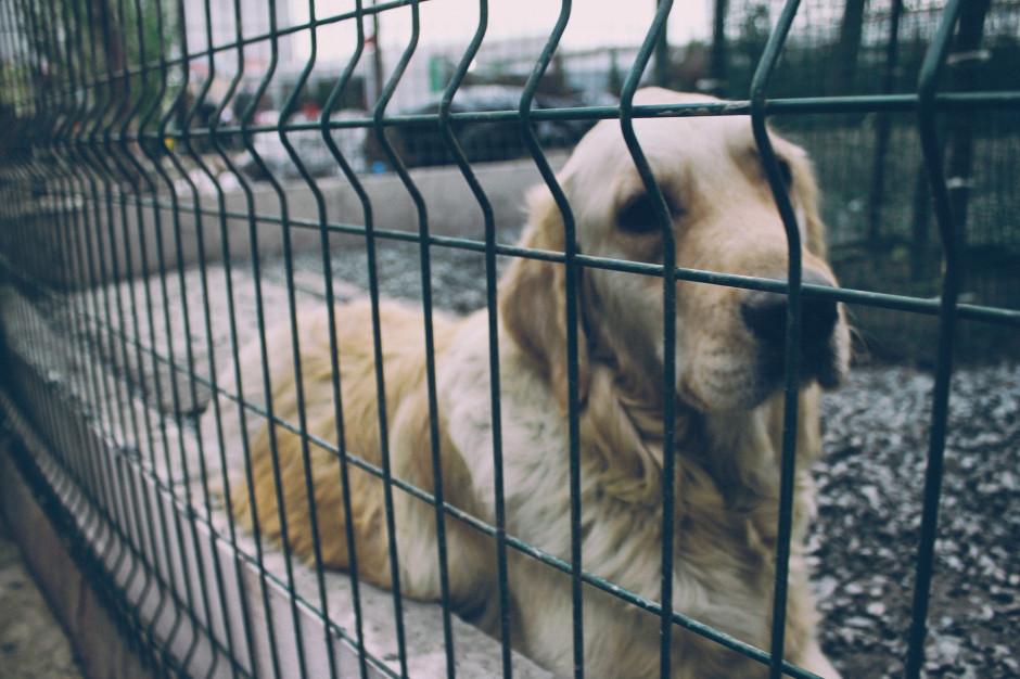 Schronisko w Sonieczkowie szuka opieki dla psów
