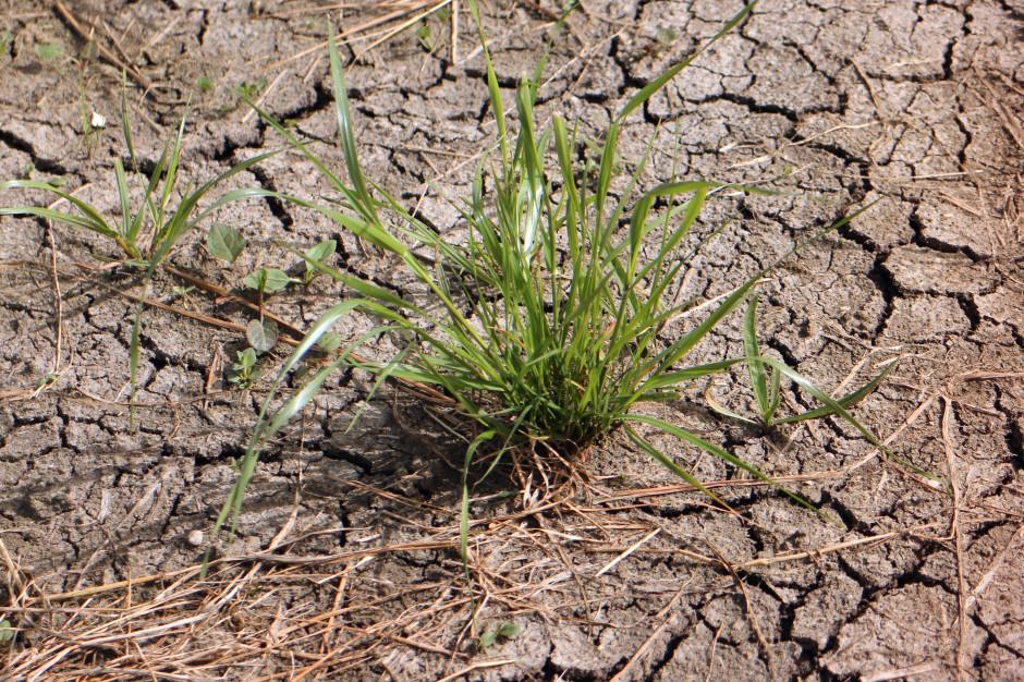 Kundzewicz: Problem braku wody będzie się pogłębiał