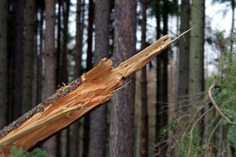 Opolskie: Połamane drzewa i brak prądu z powodu silnego wiatru