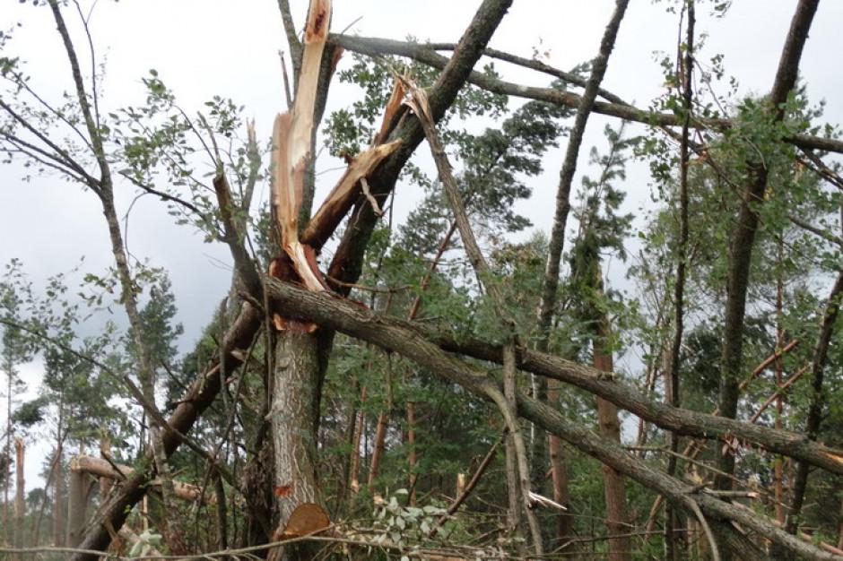 Podkarpackie:  10,5 tys. odbiorców bez prądu z powodu silnego wiatru