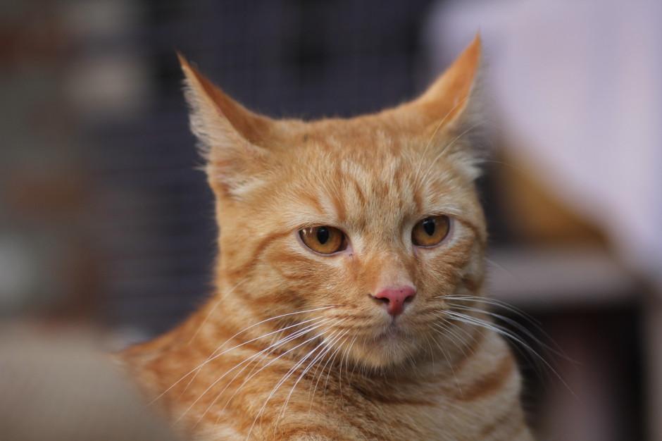 Warszawa: Warsztaty, wykłady i bezpłatne czipowanie kotów z okazji Dnia Kota