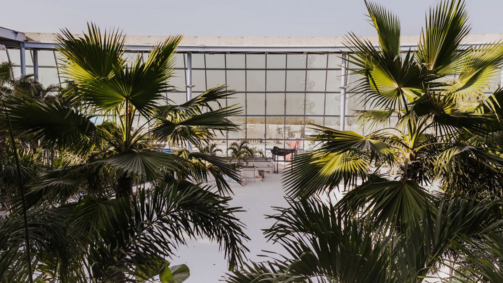 Palmy przywieziono m.in. z Kostaryki i Malezji (fot.FB)